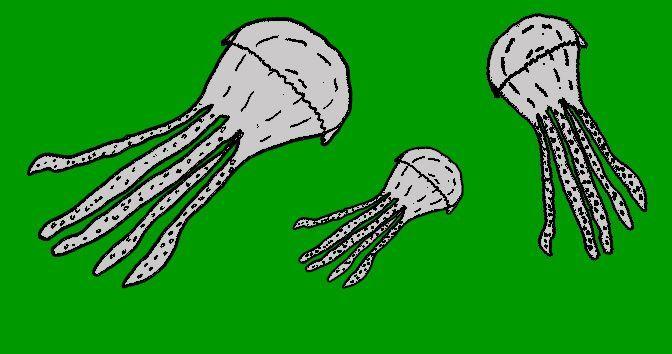 Picadura de la medusa en la Medicinapedia