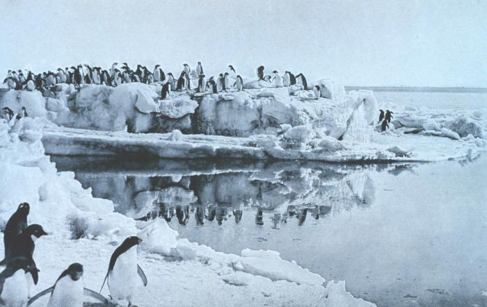 Der Unterwasserflug Bei Vgeln Pinguin Medienwerkstatt