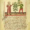 Between Herbals et alia: Intertextuality in Medieval English Herbals