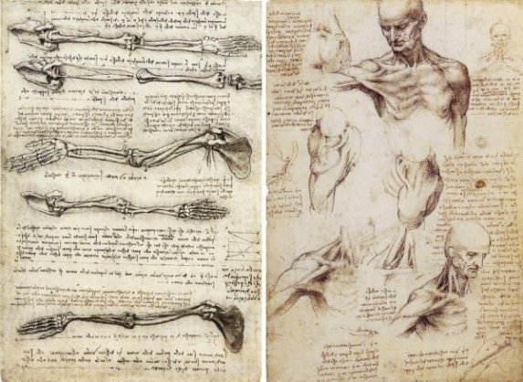 Anatomy during the Italian Renaissance: A Brief History of How ...