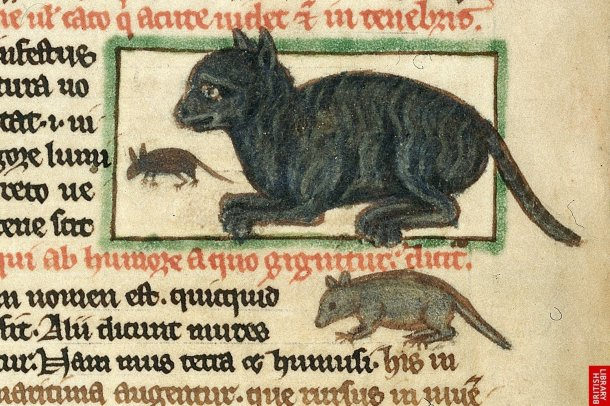 Why Cats Were Hated In Medieval Europe