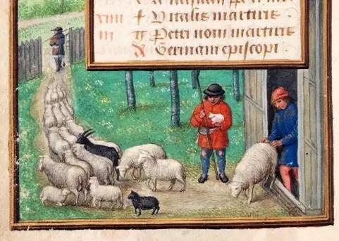 Medieval fraud