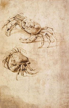 Crabs by Leonardo da Vinci