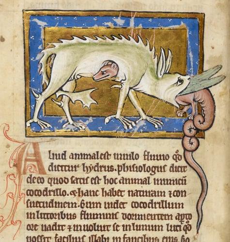 Hydrus in British Library MS Royal 12 C XIX f. 12v