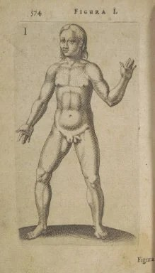 pictures of hermaphrodites Show