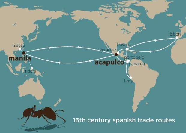 Soil was loaded onto Spanish galleons traveling from Acapulco, Mexico, to Manila, Philippines, in the 16th century. The soil, needed for ballast on empty vessels, likely also included tropical fire ants, researchers report. Photo credit: Julie McMahon