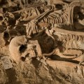 Medieval Mass Grave discovered in Paris