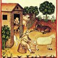 Study reveals size of livestock were at their lowest in Early Middle Ages
