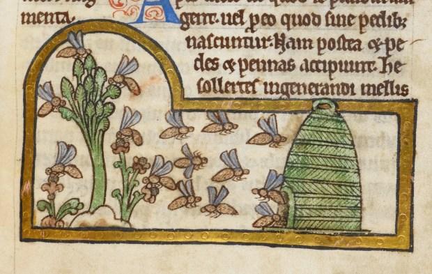 medieval bees - British Library Royal 12 C XIX f. 45
