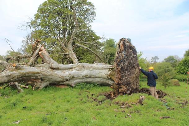 Photo from Sligo-Leitrim Archaeological Services / Facebook