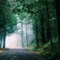 A Bad Medieval Road Trip
