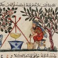 A mediaeval court physician at work: Ibn Jumayʿ's commentary on the Canon of Medicine