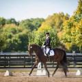 Dancing into Battle: Dressage and Medieval Horsemanship