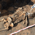 "The remains of a victim of the Lithuanian invasion of 1354 discovered in the ""Pompeii of Warmia"""