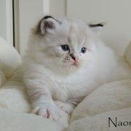 naomi_4
