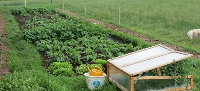 My 40 square meter garden