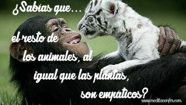 Los animales y las plantas tienen empatía.