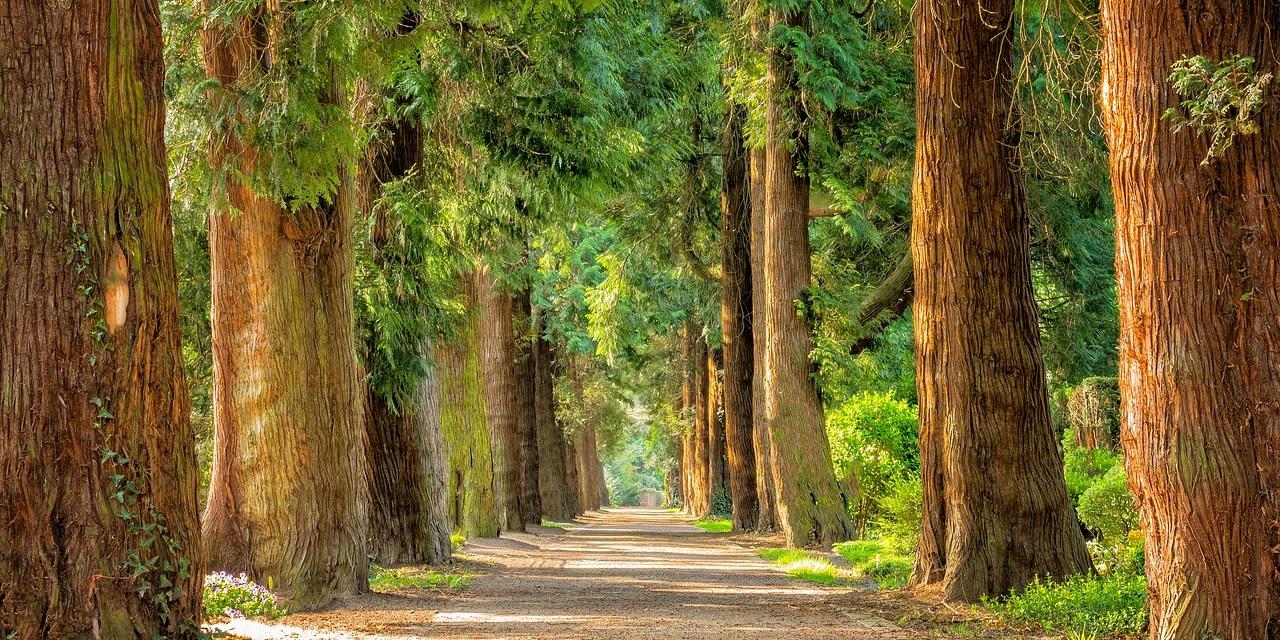 מדיטציה עם עץ ההתחלה