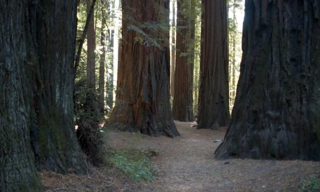 מדיטצית כניסה לעוצמה עם עץ