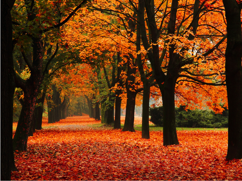 5 Reasons Why We Love The Autumn Months