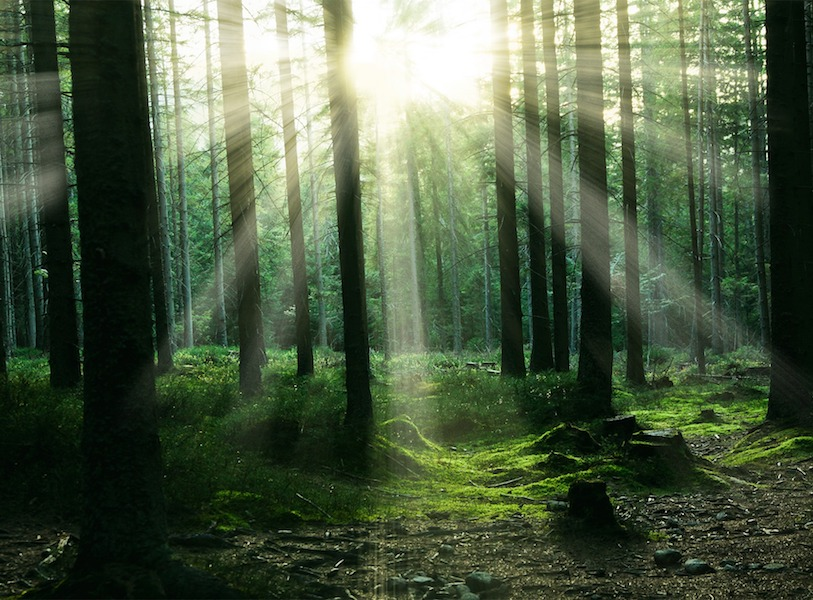 Forest Bathing Can Significantly Improve Your Life