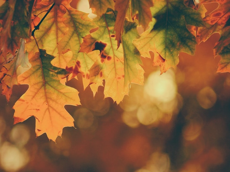 12 Reasons to Fall in Love with Autumn