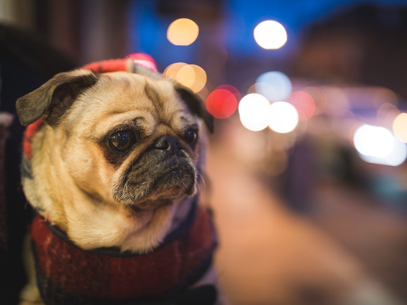6 Simple Tips to Keep Your Dog Safe During New Year's Fireworks Displays