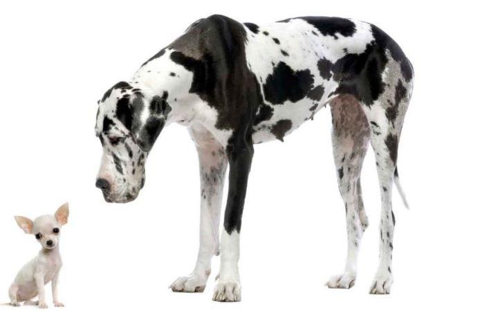 Resultado de imagen para perro grande perro pequeño