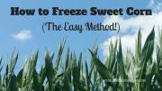 How to Freeze Sweet Corn (The Easy Method!)