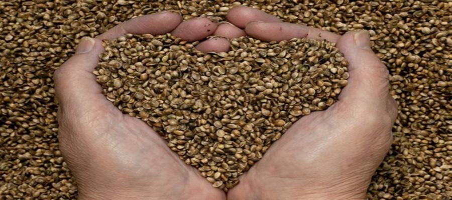 Hands Heart Love Hemp Seeds