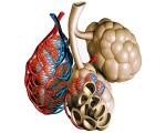 Hypoventilation alvéolaire
