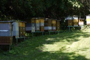 Med jak má být - Výzkumný ústav včelařský, s.r.o.
