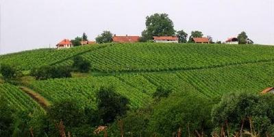 Vinogradi Međimurja