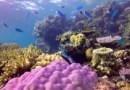 Objavljena osmrtnica: Veliki koraljni greben proglašen mrtvim