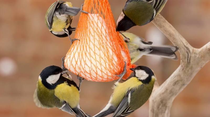 Pomozimo pticama pjevicama preživjeti zimu!
