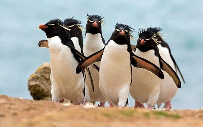 #10 The Electronic Rock pingvini