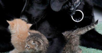 Udomljen pas brine o mačićima nakon što je mačku pregazio auto