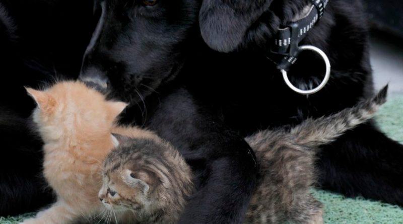 Bleki i mačići