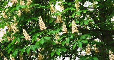green leafed yellow petaled flowering tree