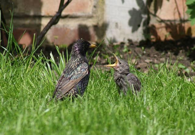 AWAP - Udruga za zaštitu divljih životinja moli da ne dirate male ptiće poletarce