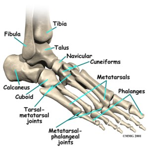 foot skeleton picture