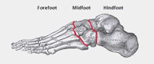 hindfoot