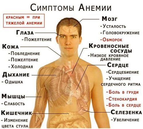 hronicheskiy-alkogolizm-i-anemiya