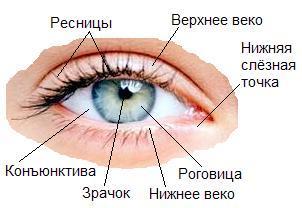 Зіниці різного розміру (анізокорія)