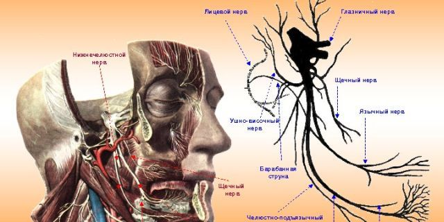 как ущемляется нерв