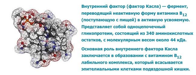 antitela-k-vnutrennemu-faktoru