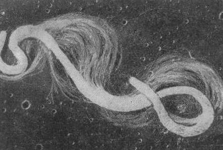 бактерии спирохеты