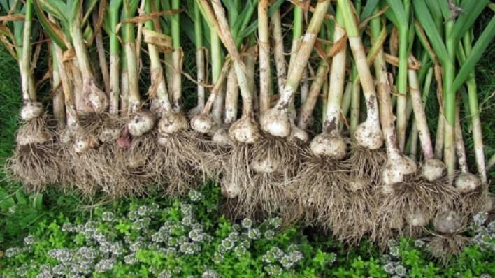 Трави для підвищення потенції у чоловіків більше 10 рецептів!