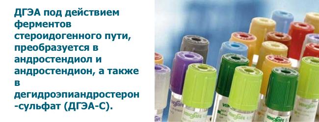 dgea-degidroepiandrosteron