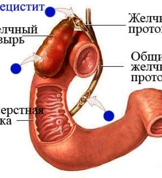 Анатомия желчного